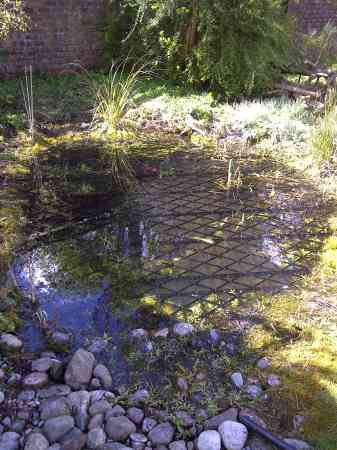 A Scottish wildlife pond