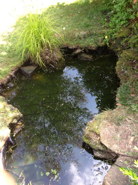 SafaDeck in freeform pond with rocky edging